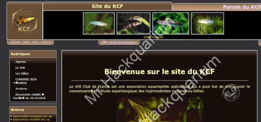 Miniature homepage miroir KCF