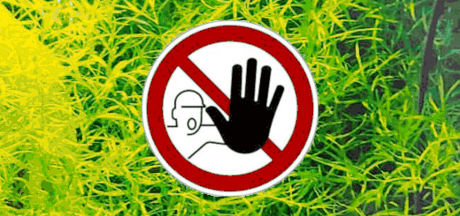 Aquariophilie et terrariophilie interdit en Guadeloupe